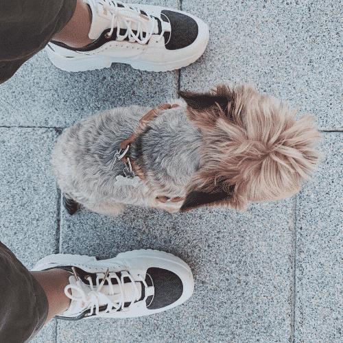 blog perros mi mejor amigo y yo