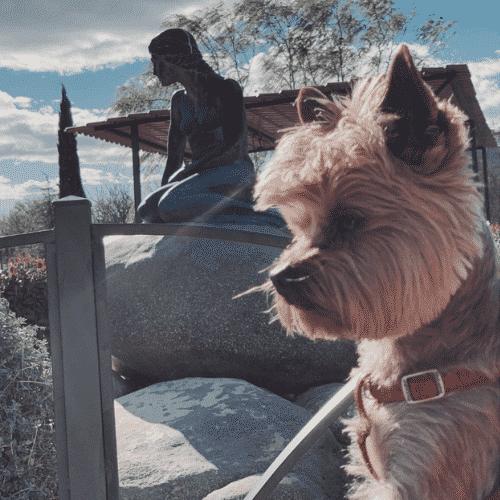 blog viajar con perro
