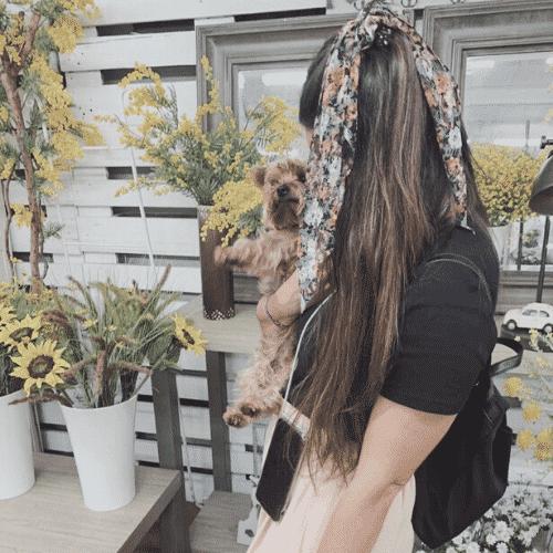 donde ir con mi perro