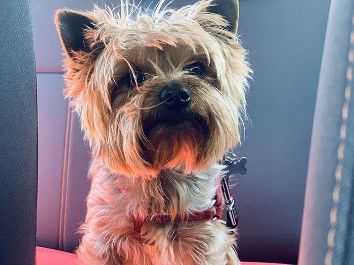 coche viajar con perro