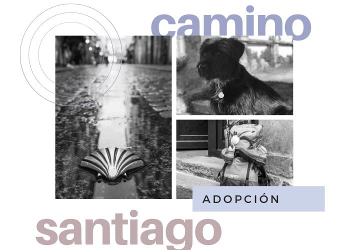adopcion perro camino santiago