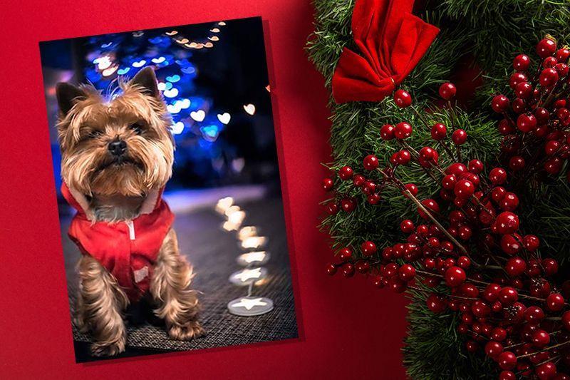 disfraz-navidad-perro