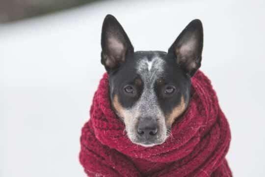 invierno ropa para perros
