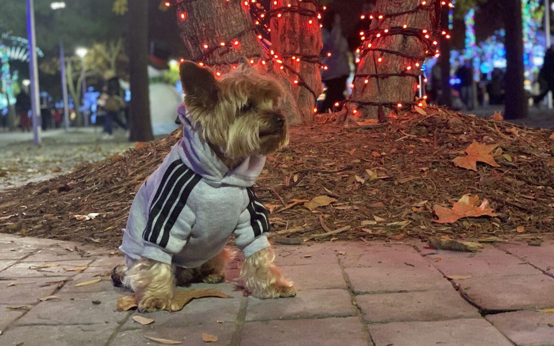 navidad-con-perro-en-madrid-5
