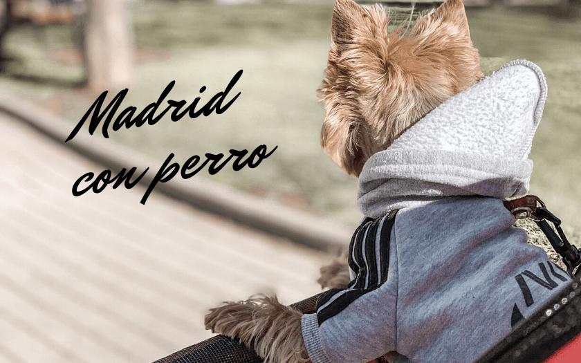 planes-con-perro-en-madrid