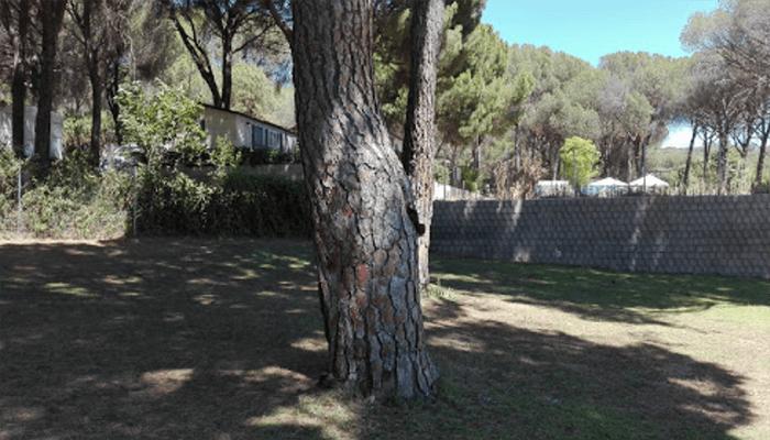 Camping Monasterio de Pelayos