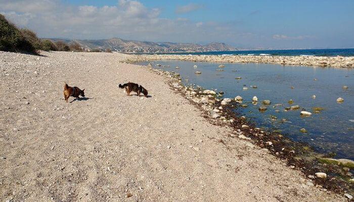 Playa Punta del Riu