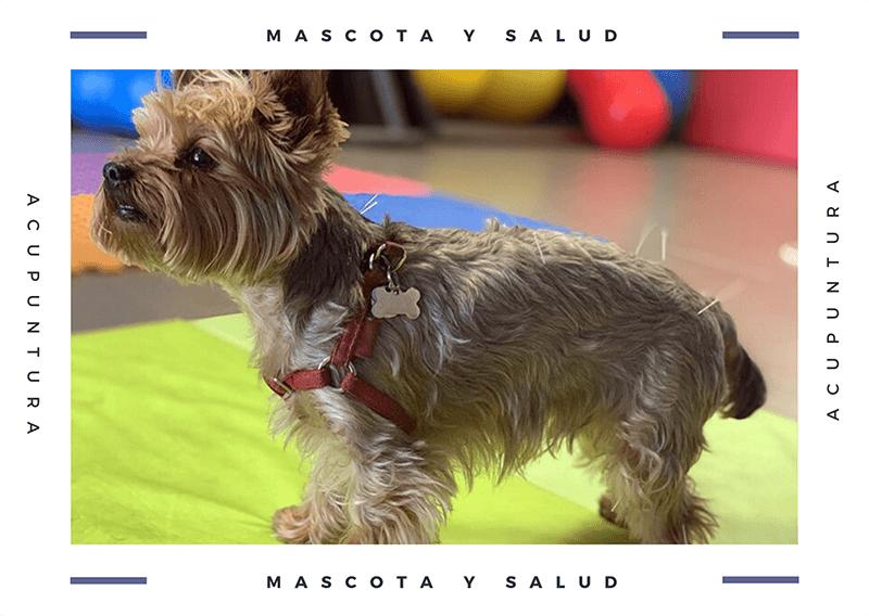 acupuntura en perros
