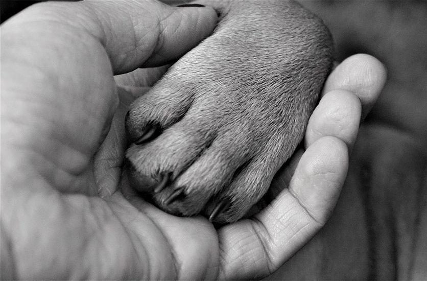 el perro es el mejor amigo del hombre