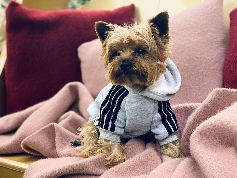 los-perros-tienen-frio