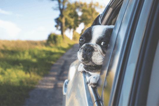 accesorios perro coche