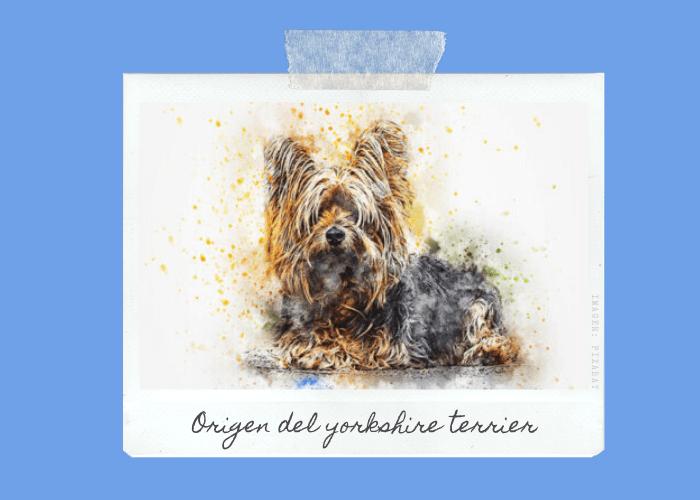 origen-yorkshire-terrier