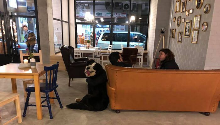 Sip And Wonder Coffee House
