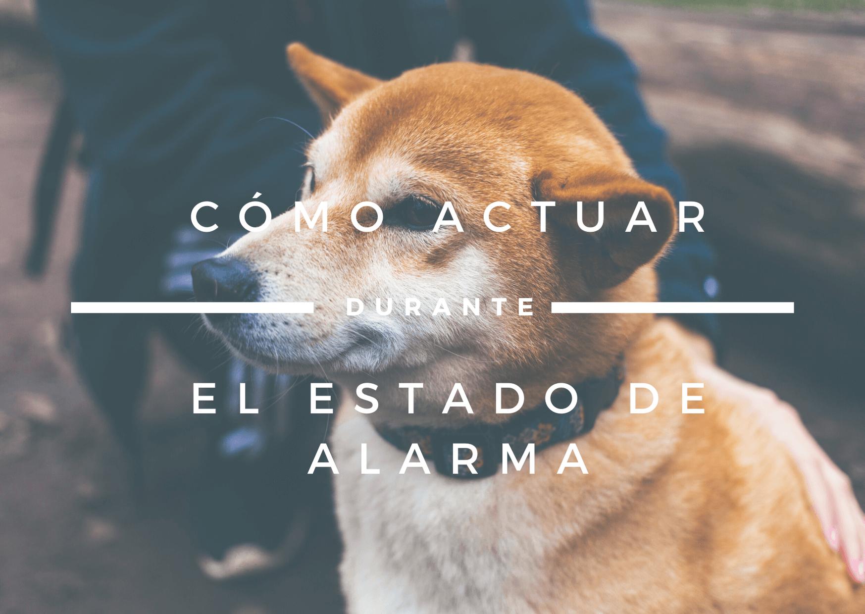 coronavirus en perros
