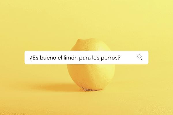es-bueno-el-limon-para-perros