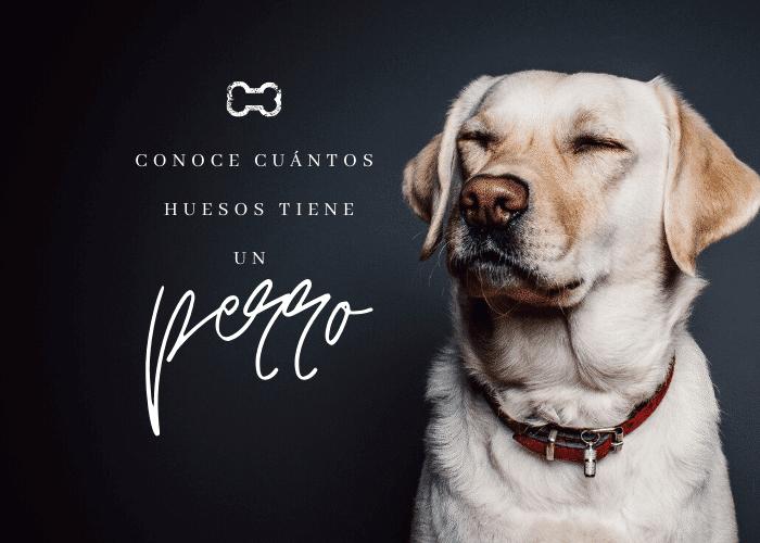 huesos-que-tiene-un-perro