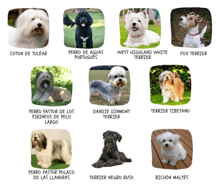 perros bigote