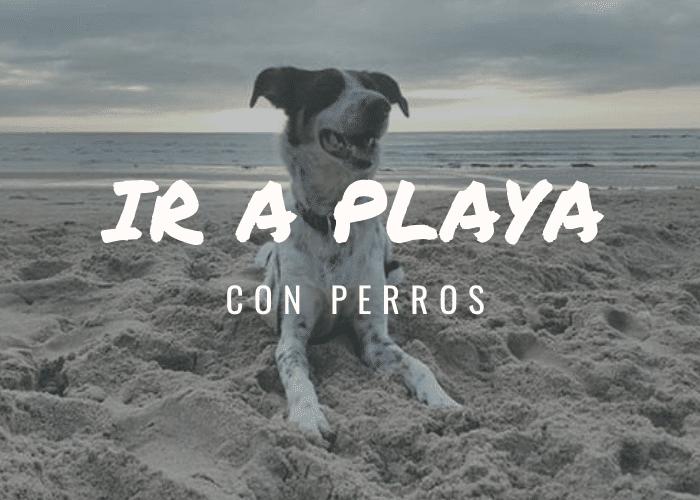CUÁNDO PUEDEN ENTRAR LOS PERROS A LA PLAYA