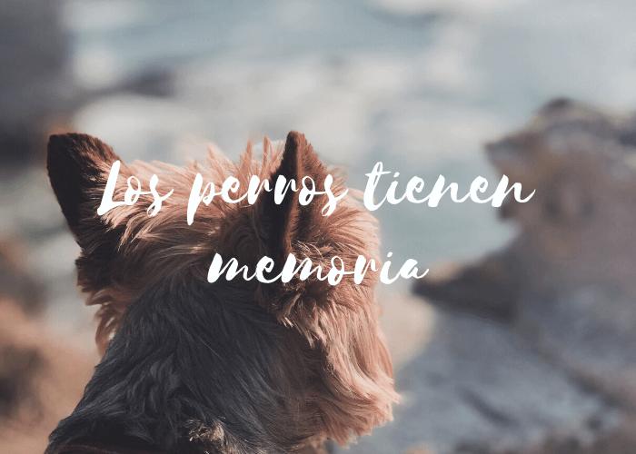 Los perros tienen memoria