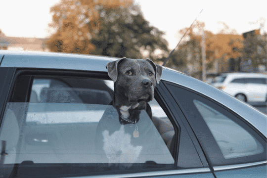 mareo coche perro
