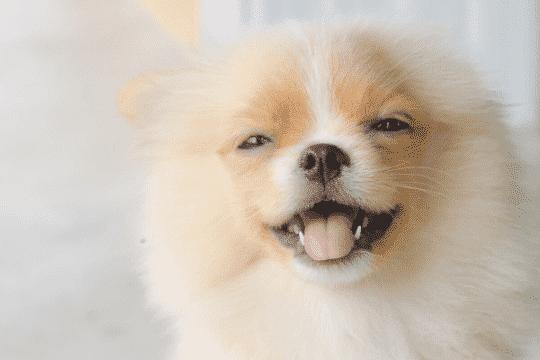 dentadura de los perros