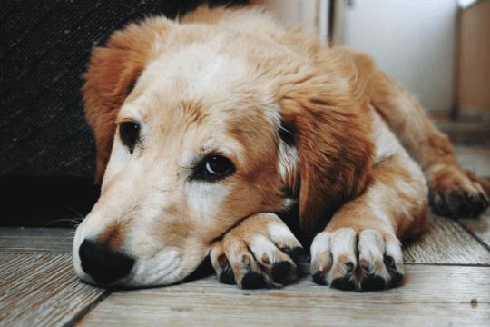 que hacer con un perro abandonado