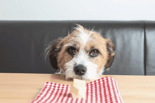 queso perros