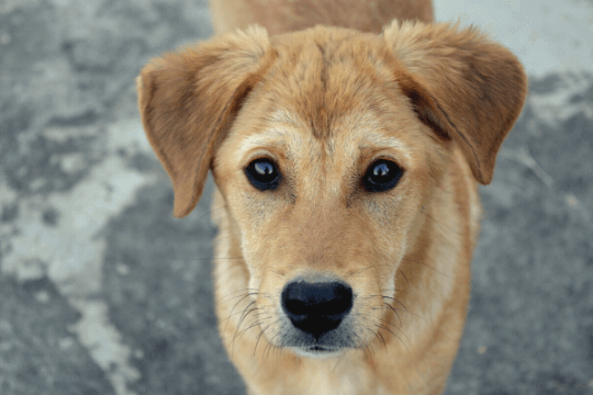 Cómo tranquilizar a un perro