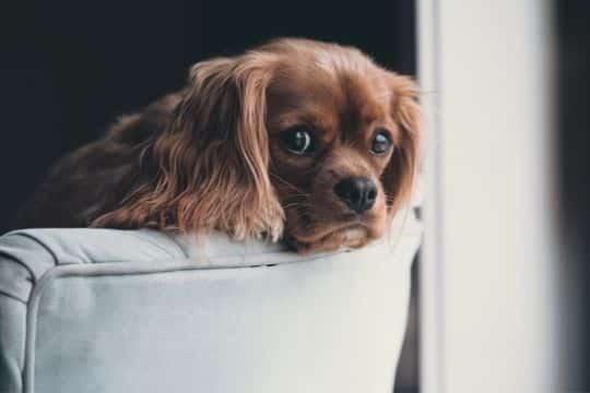 dejar perro solo en casa