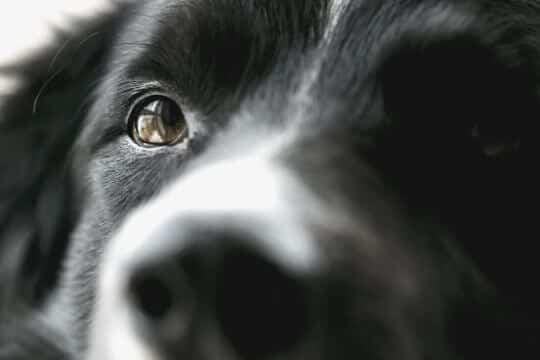 en qué colores ven los perros