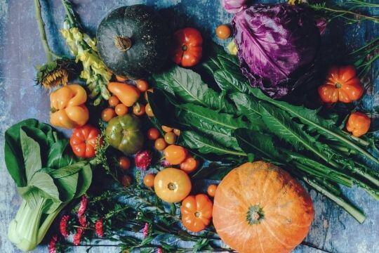 qué verduras pueden comer los perros