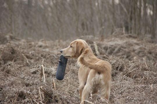accesorios para entrenar perros