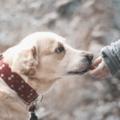 Cómo saludar a un perro