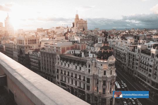 Madrid-una-ciudad-muy-dog-friendly