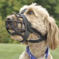 Qué perros tienen que llevar bozal