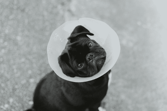 clinicas veterinarias