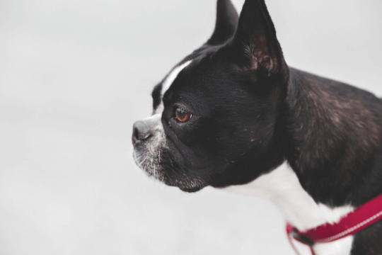 que hacer cuando adoptas un perro