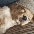 Posturas de perros al dormir