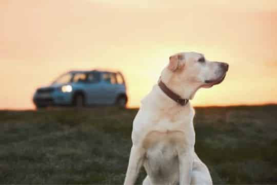 viajar a portugal con perro